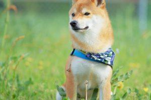 犬のペット火葬斎場