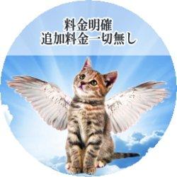 天国へ昇るネコ