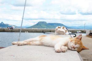 ノラ猫をペット葬儀