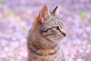 世田谷区のお花畑のネコ