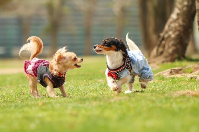 埼玉県で犬のペット火葬
