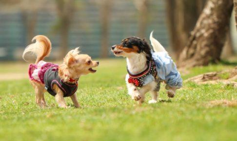 品川区の公園で遊ぶ2匹の犬