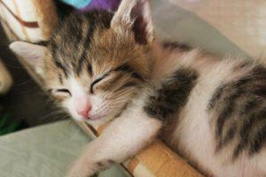 新座市の猫をペット葬儀