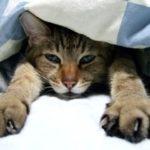 清瀬市で2匹のネコをペット火葬